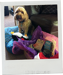 Alfie with his PetStay Dog Gift Box