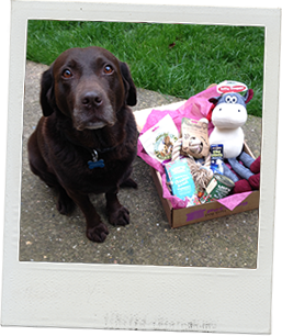 Lily and her PetStay Gift Box